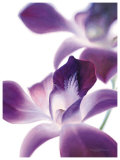 Purple Orchid I Posters by Annemarie Peter-jaumann