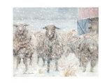 Pure Wool Prints by Hélène Léveillée