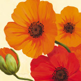 California Poppies Prints by Susanne Bach