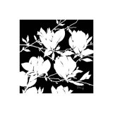 Black and White Magnolia Print by Franz Heigl