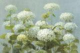 White Hydrangea Garden Posters par Danhui Nai
