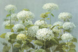 White Hydrangea Garden Prints by Danhui Nai