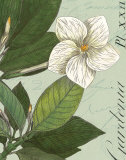 Botanique Bleu III Prints by Hugo Wild