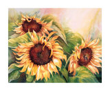 Sunflower Trio Print by Renée Mizgala