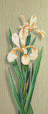 Iris Posters by M. Allegri