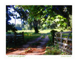Oak And Gate, Tallahassee, Florida Photographic Print by Jamie Marsh