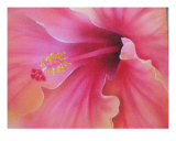 Hibiscus Hiatus Giclee Print by dilip patel