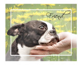 Boston Terrier Friend Photographic Print by Patti Meador
