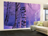 Birch Tree at a Riverside, Vuoksi River, Imatra, Finland Wall Mural – Large