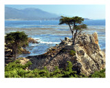 The Lone Cypress Tree Photographic Print by Lorrie Morrison