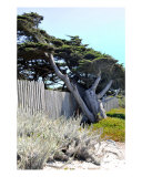 Leaning Tree By The Sea Photographic Print by Lorrie Morrison