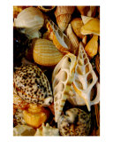 Seashell Bed Photographic Print by Anna Williams