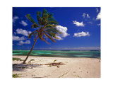 Grand Cayman Beach With A Palm Tree Photographic Print by George Oze