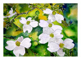 Dogwood Tree Flower Painting Giclee Print by Derek Mccrea