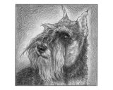 Schnauzer Giclee Print by Evelyn Morris Hecht
