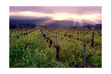 Napa Valley Sunset, Oakville, California Photographic Print by George Oze