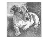 Jack Russell Giclee Print by Evelyn Morris Hecht
