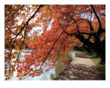 Fall Foliage Around Tida Basin Washington Dc No-5 Photographic Print by William Luo