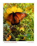 Sonoran Butterfly, Tucson, Arizona Photographic Print by Jamie Marsh