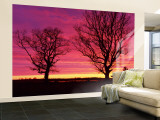 Oak Trees, Sunset, Sweden Wall Mural  Large