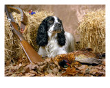 Gundog 2 Photographic Print by Alan Bedding