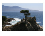 Lone Cypress Photographic Print by Evin O'keeffe