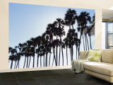 Toddy Palms Near Mahabalipuram Tamil Nadu, Southern India Wall Mural – Large