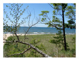 Lake Michigan Dunes Photographic Print by Michelle Calkins