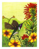 The Hummingbird Giclee Print by Janet Edwards