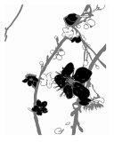 White N Black Cherry Blossom Photographic Print by Estela Lugo