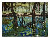 Alakai Swamp Giclee Print by John Hall