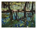 Alakai Swamp Giclee Print by John Hall