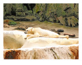 Cozy Polar Bear Photographic Print by New Yorkled