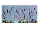 Cattails For Anne Giclee Print by Ann Tuck