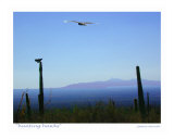 Hunting Hawks, Tucson, Arizona Photographic Print by Jamie Marsh