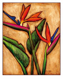 Bird Of Paradise Giclee Print by Ara Witmer