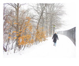 Man Braving Against A Snow Storm In Central Park Photographic Print by New Yorkled
