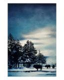 Blue Mist Giclee Print by Teri Rosario
