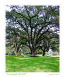 Summer Bench, Chain Of Parks, Tallahassee, Florida Photographic Print by Jamie Marsh