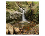 A Waterfall In Provence Forest Photographic Print by Patrick Morand