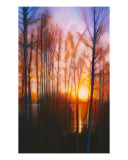 Winter Siljan Sunset 2 Giclee Print by Dan Berkeland