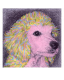 Pretty In Pink Giclee Print by Evelyn Morris Hecht