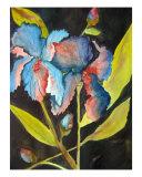 Black Iris Giclee Print by Lil Taylor