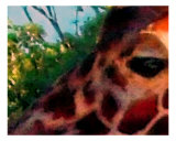Giraffe Photographic Print by Jamie Atkinson