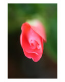 Inpatien Bud Photographic Print by Cathy Case