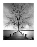 Ruhe - Silence Photographic Print by Tatyana Zabegalin