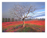 Red Field Giclee Print by Veronique Radelet