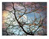 Fractured Moon Photographic Print by Donald Bitterman