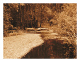 Silent Brook Photographic Print by Wendy Traxler