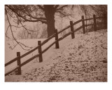 First Snow Photographic Print by Bruno Moore